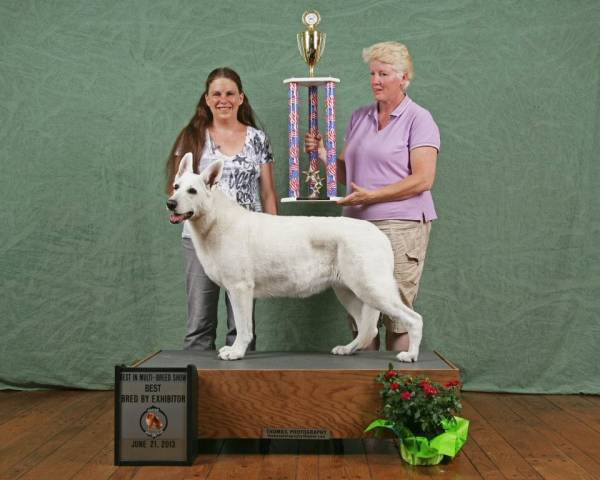 Breeder/Owner/Handler Best in Multi Breed Show
