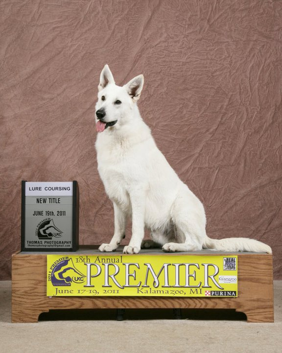 Max, White Shepherds, Shylo Star Kennels, Rhinelander WI,  Service Dog, CGC Evaluator