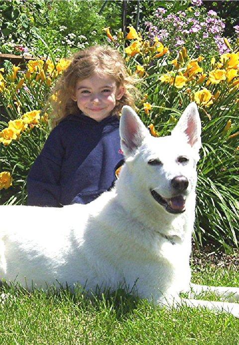 White Shepherd Shira, Shylo Star Kennels, Rhinelander WI,  Service Dog, CGC Evaluator, Zoie, Junior Handler